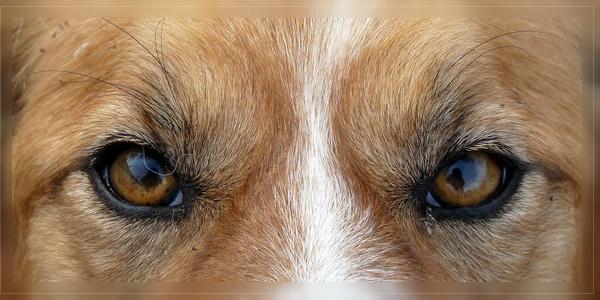 Augen Scottie