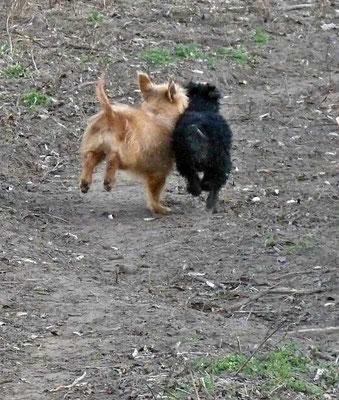 Buddy und Zsizsi (7)