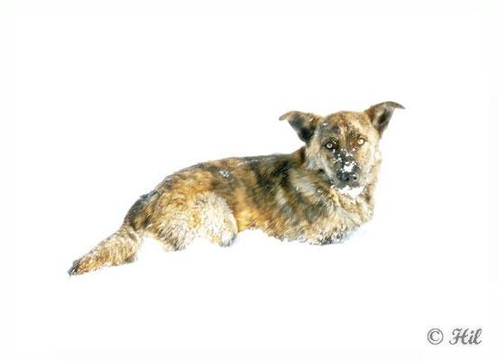 Foxi (12)