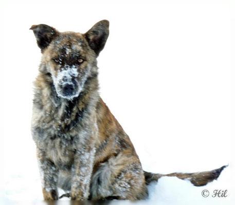 Foxi (13)