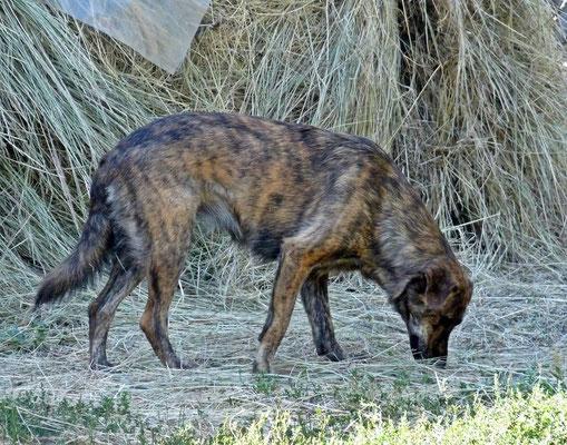 Foxi (19)