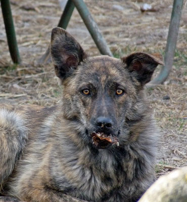Foxi (6)