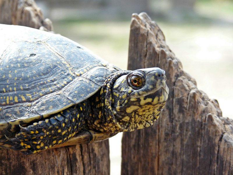 turtles (1)