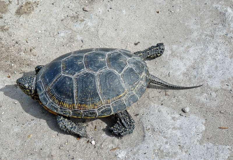 turtles (10)