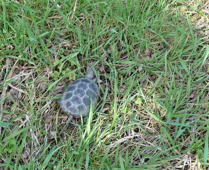 turtles (12)