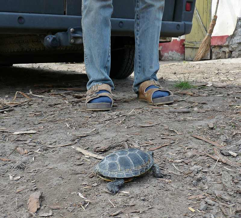turtles (4)