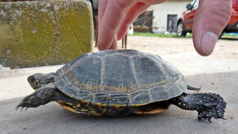 turtles (8)