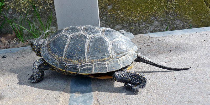 turtles (9)