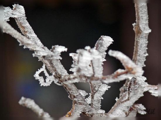 winter (19)