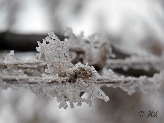 winter (21)